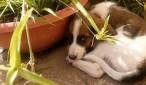 Cane abbandonato a Montalto centro in cerca di adozione